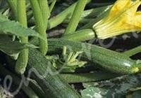 Karpuz, kavun, salatalık ve kabak öldürebilir!
