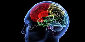 Beyninizi öldüren 11 gıda maddesi