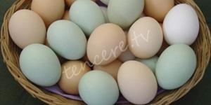 Yumurtadaki büyük hileyi deşifre ettiler