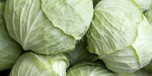 Mucize besin kaynağı lahana